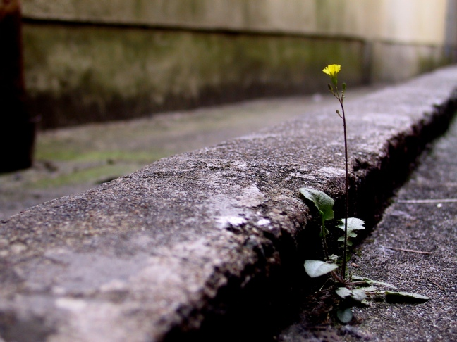 flower from cement
