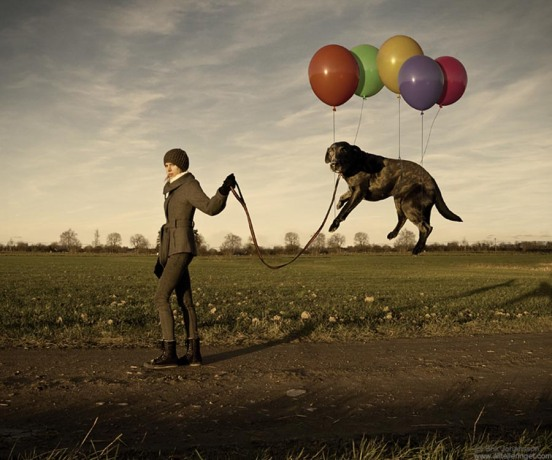 lazy-dog - Erik Johansson